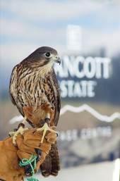 PRNZ Falcon