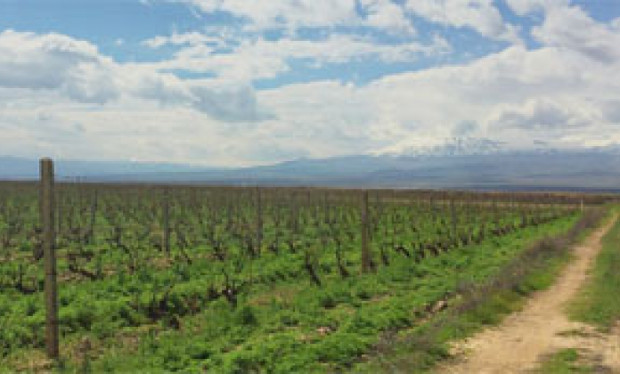 SDG #8: Pernod Ricard's initiative with Positive Planet in Armenia