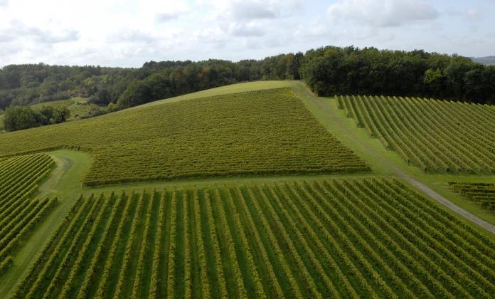 Vineyard 2008