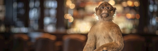 Monkey 47 visual
